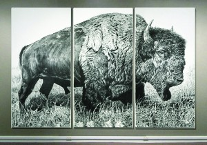 "Rick Shaefer, American Bison, triptych, 2013, charcoal on vellum mounted on aluminum, 96 x 148"". At the Stamford Museum and Nature Center."
